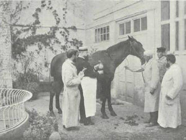 Médico de Barcelona extrai sangue de um cavalo