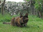 Um gato com uma câmera que capta seu comportamento diário.