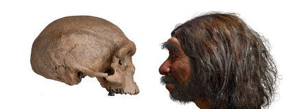 O crânio do 'Homo longi' e uma reconstituição de sua aparência.