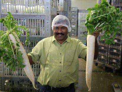 Membro da delegação indiana visita projeto agrícola em São Paulo.