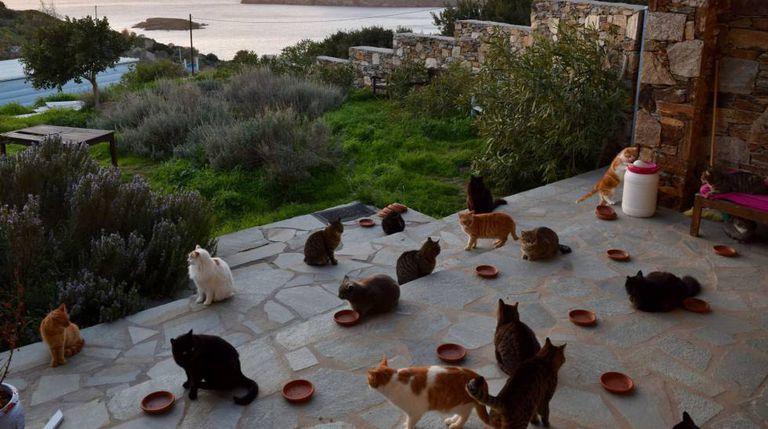 Gatos no santuário felino de Siros, na Grécia.