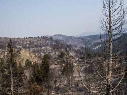 Vista de uma zona arrasada pelo fogo em Chubut
