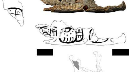 Fragmento de troféu de crânio de Pacbitun.