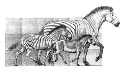 Três espécies que conviveram na península Ibérica há mais de cinco milhões de anos. Cada quadrado representa uma altura de 50 centímetros.