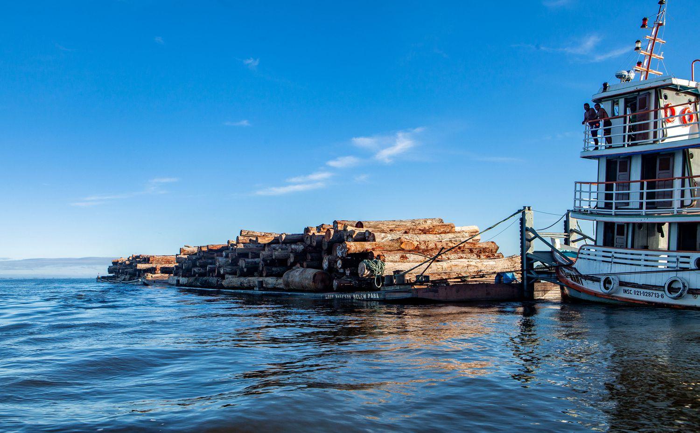 Madeira sendo transportada pelo rio Xingu, na região de Porto de Moz, no Pará.