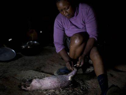 Uma mulher de Camarões prepara como alimento um porco-espinho caçado na selva.