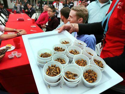 Degustação de insetos em Boston (EUA), em 2015.