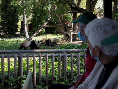 Idosos de dois asilos de Madri, que foram vacinados contra a covid-19, fazem o primeiro passeio em grupo em um zoológico após 15 meses isolados por causa da pandemia.