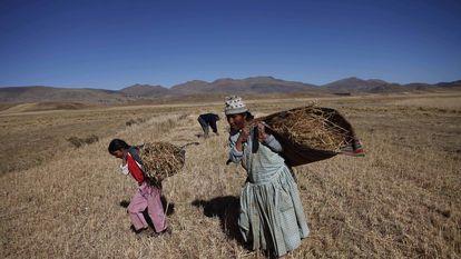 Nesta foto, tirada em maio de 2011, uma mulher e sua filha carregam sua colheita de aveia em Achacachi, na Bolívia, afetada pela pior seca em 20 anos.