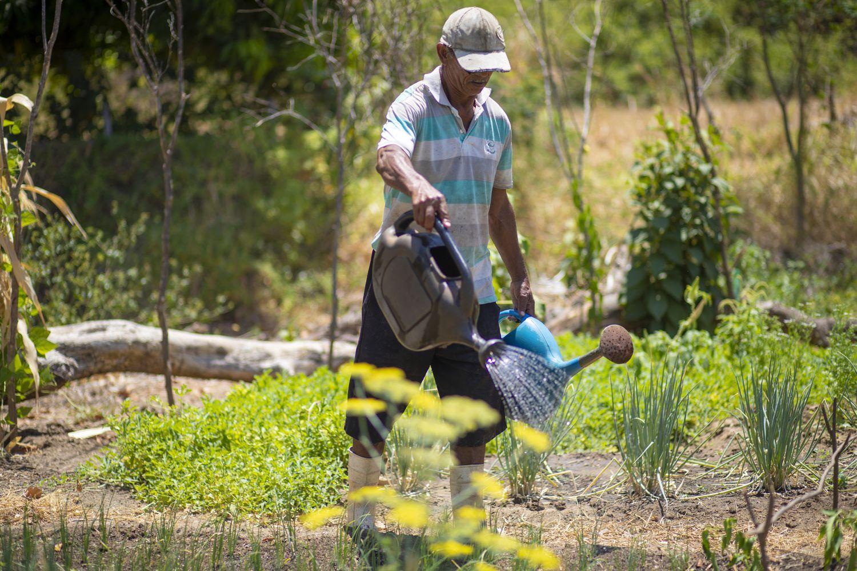 Francisco Monteiro vende os produtos orgânicos que planta no quintal de casa.