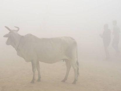 Uma vaca em meio à névoa poluída de Nova Delhi (Índia)