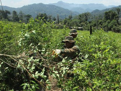 Bolívia, Colômbia e Peru são os principais produtores mundiais de coca e também de seu  derivado ilegal, a cocaína.