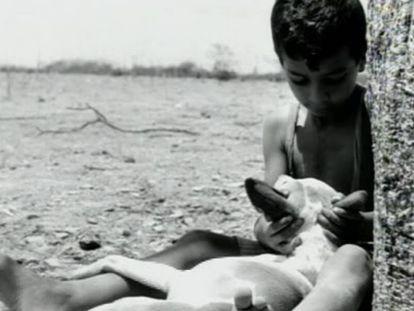 Cena do filme 'Vidas Secas', de Nelson Pereira dos Santos.