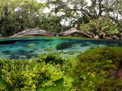 Mergulho no rio Sucuri, uma das mais de 30 atividades para curtir em Bonito.