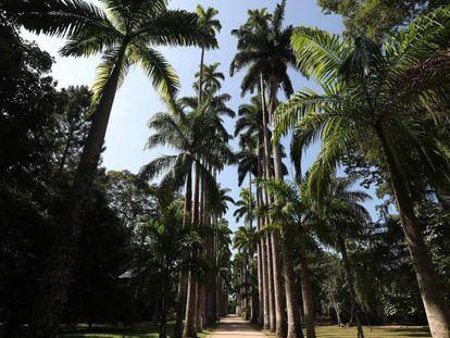 As Palmeiras Imperiais do Jardim Botânico do Rio de Janeiro, patrimônio nacional do Brasil, tema de documentário.