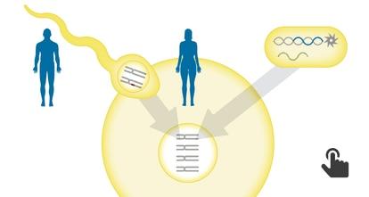 GRÁFICO: A técnica CRISPR, que repara o DNA nocivo