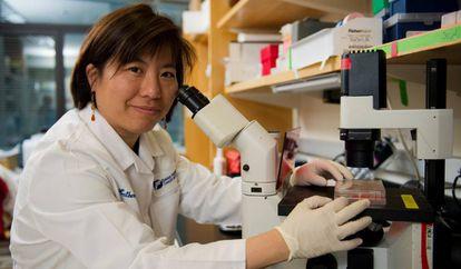Katherine Wu, pesquisadora do Instituto de Câncer Dana-Farber, em Boston (EUA).