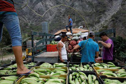 Trabalhadores transportam produtos agrícolas em La Grita (Venezuela).