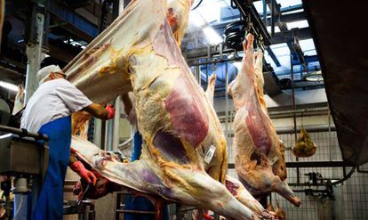 Um carnicero desuella uma vaca em um matadero dinamarquês.
