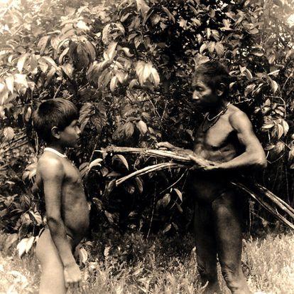 Um pajé macuna e um menino colhem cipó-mariri ('Banisteriopsis caapi') no rio Popeyacá (Colômbia, 1952).