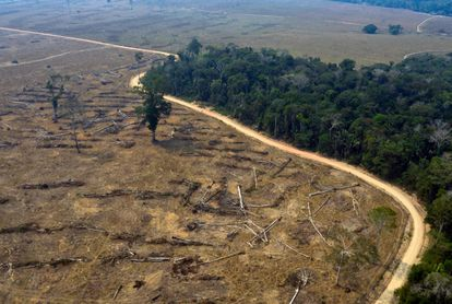 Vista aérea de uma região da Amazônia devastada em 24 de agosto de 2019, próximo a Porto Velho, em Rondônia.