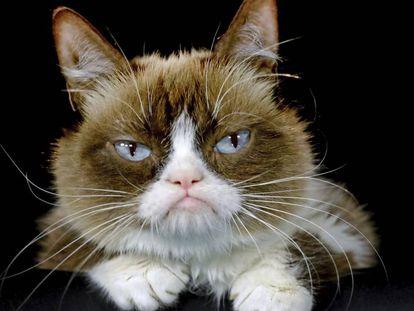 Grumpy Cat, a 'Gata Rabugenta' mais amada da Internet. posa para foto em Los Angeles em 2015.