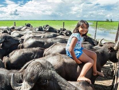 A estudante Sthefany do Amaral, de 9 anos, no lombo de um dos búfalos criados por seu pai, na resex Verde Para Sempre.