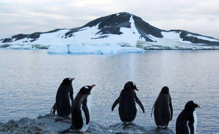 Pinguins em uma área da Antártida