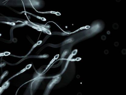 Espermatozoides vistos ao microscópio