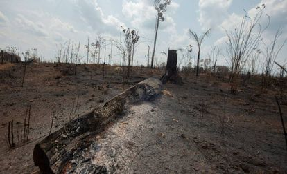 Trecho de floresta queimada em Rondônia, no último domingo.
