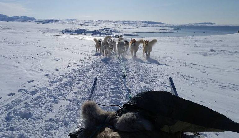 Cães puxam um trenó na ilha de Disko, na Groelândia, em março de 2019.