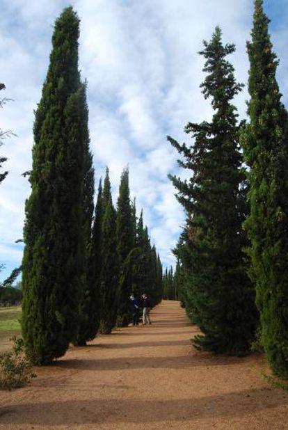 Uma avenida de ciprestes em Mérida (Extremadura).