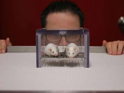 Pesquisador em um laboratório