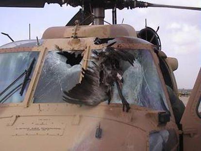 Um grou comum esmagado contra um helicóptero UH-60 Black Hawk.