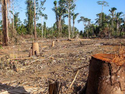 Imagem de operação do Ibama que registrou focos de desmatamento.