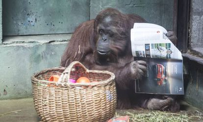 Sandra com uma revista ao lado da cesta com sua comida.