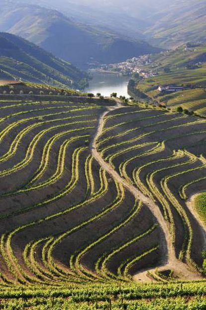 Vinhedos nas ribeiras do Duero, perto da localidade portuguesa de Pinhão.
