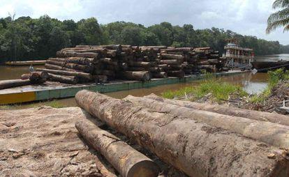 Madeira de desmatamento da Amazônia.