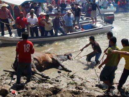 A festa popular mexicana que maltrata os touros velhos