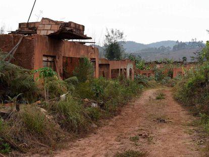 O mato já tomou conta das ruínas de Bento Rodrigues.