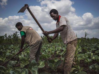 Agricultores em Moçambique em agosto.