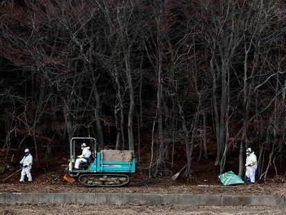 Grupo de operários trabalha na descontaminação em um bosque nos arredores da central de Fukushima (Japão) em fevereiro de 2015.