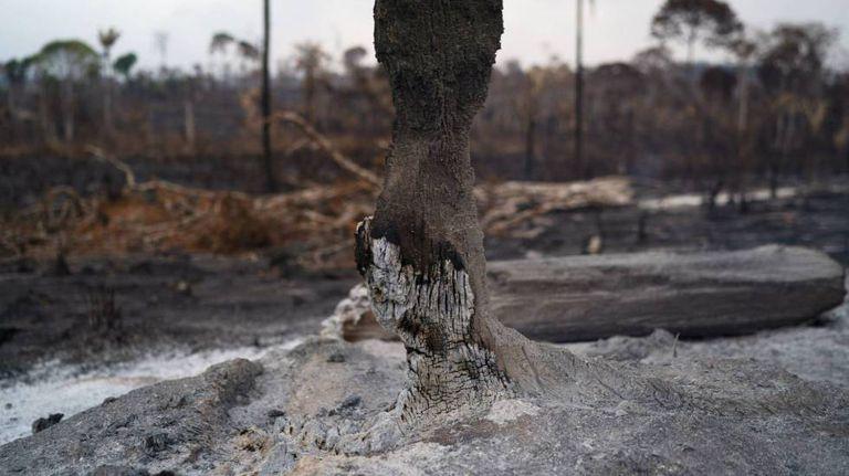 Tronco de uma árvore arrasado pelo fogo na Amazônia.