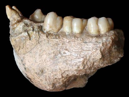 Mandíbula achada na cova de Chuifeng, no sul da China.