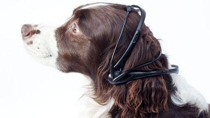 Os pesquisadores provam um protótipo do Não More Woof em um cão.