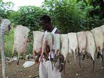 Los pangolines en África se consumen o se venden a China.