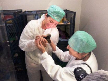 May-Brirr Moser mostra um rato à renomada cientista de 96 anos Brenda Milner.