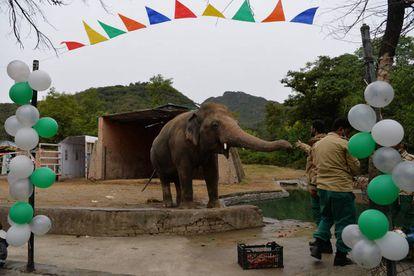 O elefante recebeu uma festa de despedida ao deixar seu zoológico no Paquistão