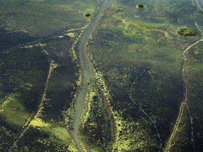 Panorâmica de uma zona florestal ao norte do Estado do Amapá.