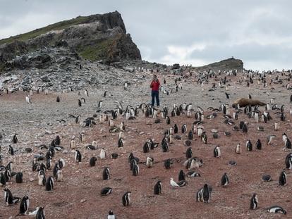 Pinguins em Hannah Point, Antártida.